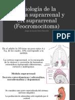 Feocromocitoma.pptx