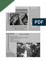 Fisiomorfologia Forestal Clase