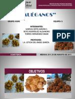MUEGANOS.pptx