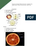 Botanica Fruto