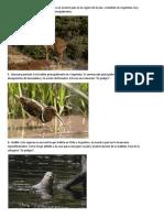 Animales Chilenos en Extincion