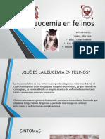 Leucemia en Felinos