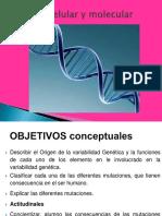 MUTACIONES Y POLIMORFISMO 24-07-19.ppt
