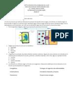 evaluacion final 4 y 5 de primaria
