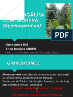 Gimnosperme - Ene Oana + Andrei Anca