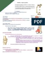 Resumen Anatomía Rodilla y Región Poplítea