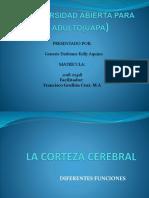 La Corteza Cerebral.pptx Genesis Kelly