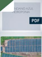 Proyecto Arándano Azul hidroponia