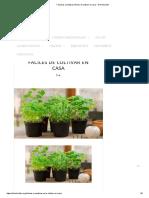 7 Hierbas Aromáticas Fáciles de Cultivar en Casa - El Horticultor