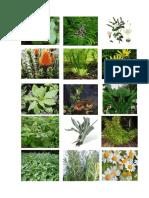 Plantas Fotos