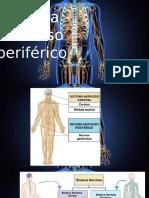 2. Sistema Nervioso Periferico