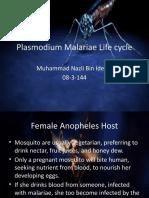 Plasmodium Malariae Life Cycle