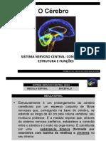 O Cérebro II