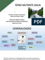 Reino mutante agua Fisiología, etiología y fisiopatología
