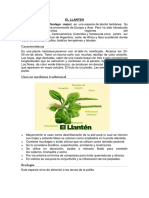 EL LLANTEN.docx