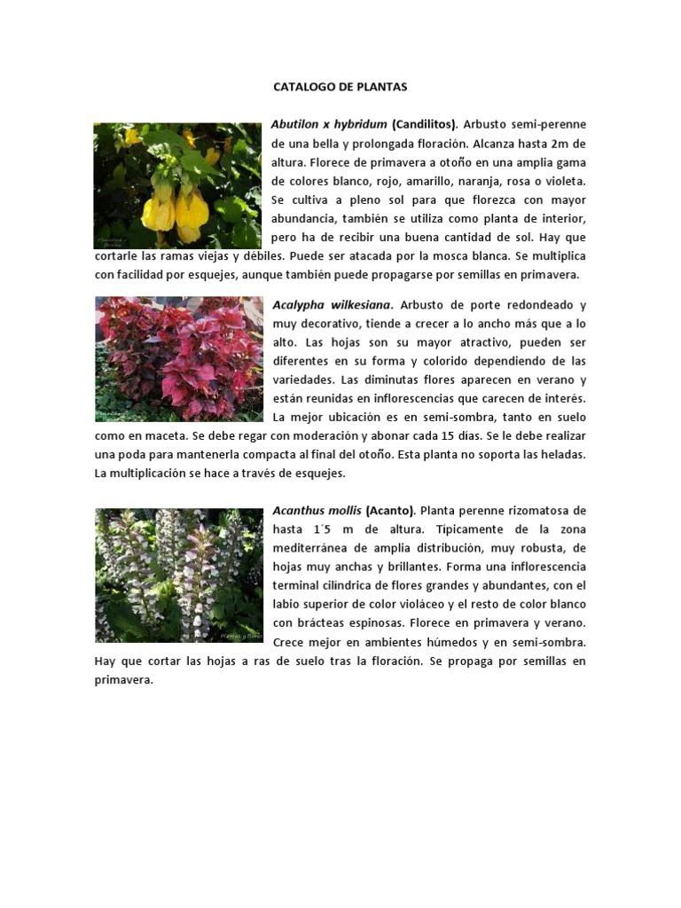 Catalogo de plantas for Porque hay arboles de hoja perenne