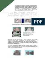 Duplicado de Modelos,Modelo Refractario y Modelado en Cera Guia 2016 (1) (1)
