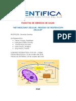Informe de Laboratorio Metabolismo Celular