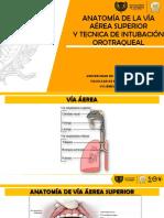 Anatomia via Aerea e Intubacion