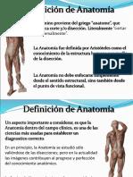 anatomia 2.ppt