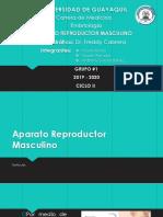 Aparato Reproductor Masculino G6