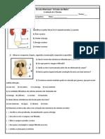 prova 8 ano sistema urinário