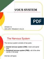 The nervous system (cambridge igcse)