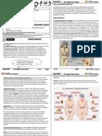 4 - sistema endocrino.docx