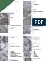 biocel (1).pptx