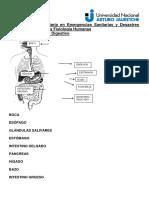 Resumen Sistema Digestivo AAP
