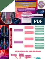 Sistema Nervioso Central Fisiologia