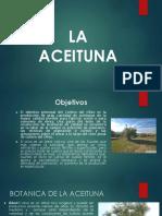 ACEITUNAS.pptx