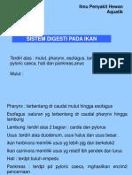 digesti ikan