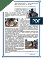 ARTICULO PERIODISTICO PSICOLOGIA L  HOGAR DE PONY.pdf