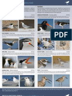 Beach Nesting Birds Reference Guide