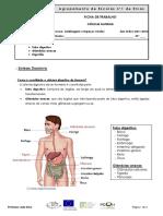 Ficha informativa - Sistema Digestivo
