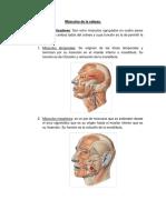 Músculos de la Cabeza y Cuello