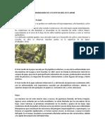 Enfermedades en Cultivos Del Ecuador