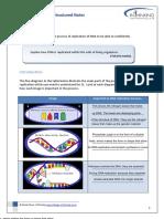 DNA Replication Worksheet