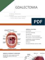 amidectolomia