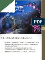 Aula - 04 Citosol