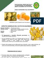 Manejo agronomico_Aguaymanto