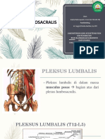 NADIA - Plexus Lumbosacralis