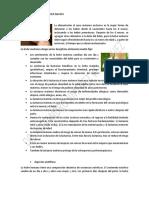 LA ALIMENTACION DEL RECIEN NACIDO PATLI.pdf