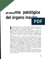 Anatomia Patologica Del Pancreas Por Diabetes