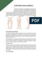 Fisiologia Articular