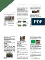 Produccion de quinua organica GORP.docx
