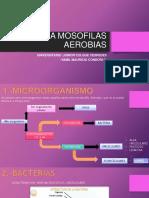Bacteria Mosofilas 2018 Mañana