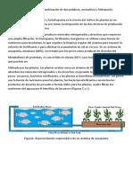 proyecto acuaponia.docx