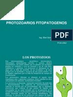 Clase 7 Protozoarios Fitopatogenos